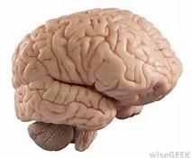 mental clarity aware alert stay sharp for seniors