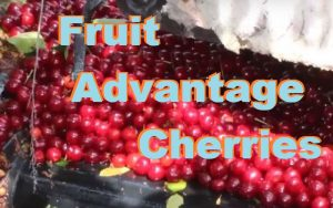 The Advantages Of Consuming Tart Cherry Juice Concentrate